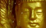 Hoa Ưu Đàm 3000 năm xuất hiện 1 lần khai nở tại Hà Tĩnh
