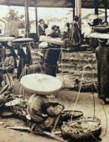 Việt Nam qua mắt giáo sĩ phương Tây : Sản vật xứ Bắc kỳ
