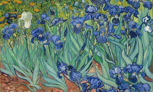 Bí ẩn quanh các bức Hoa Diên Vĩ (Irises), lẫy lừng của Van Gogh.